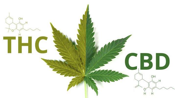 Comparacion moleculas THC y CBD