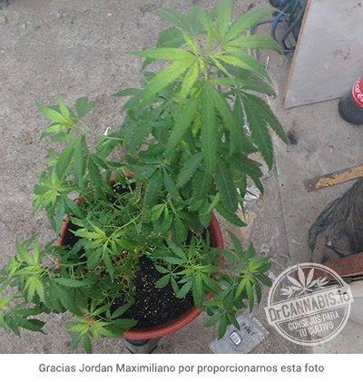 carencia-de-hierro-17-19-02-facebook-jordan-maximiliano