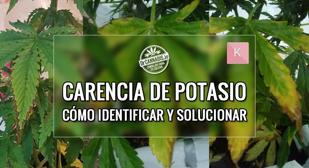 Carencia de potasio en marihuana en floraci n identificar for Potasio para plantas
