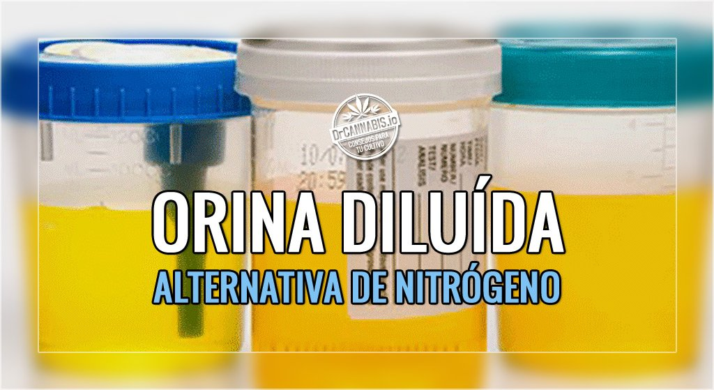 Abonar con Orina Diluída, alternativa de aporte de Nitrógeno