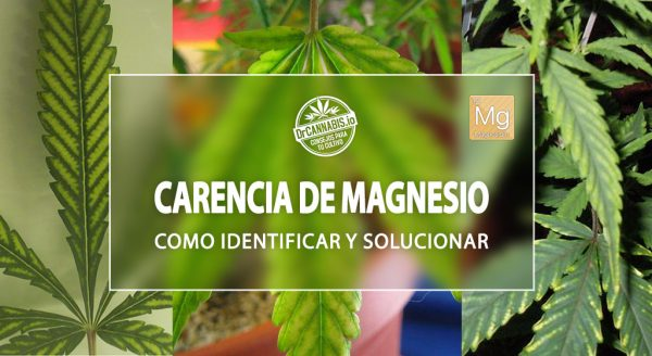 carencia-magnesio-marihuana