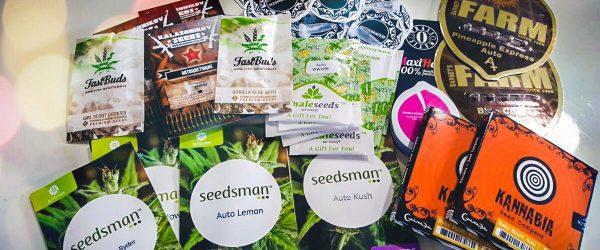 cannabis-seeds-beginners