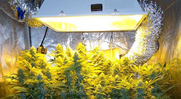 best-hid-grow-lights-top-picks