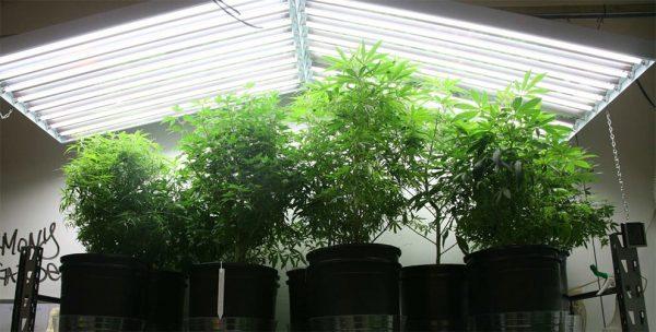best-t5-grow-lights