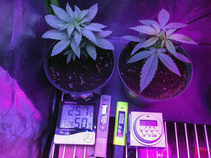 temperature-in-grow-tent